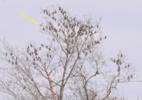 122 bohemians and 1 cedar 03Mar2021.png