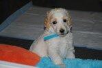 puppy pic 6.jpg